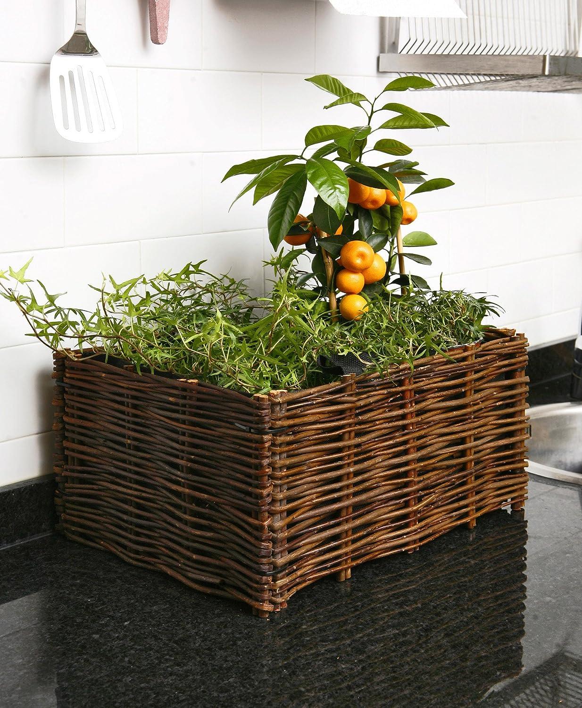 Catral 71080001 - huerto urbano kit planter, 30 x 40 x 20 cm ...