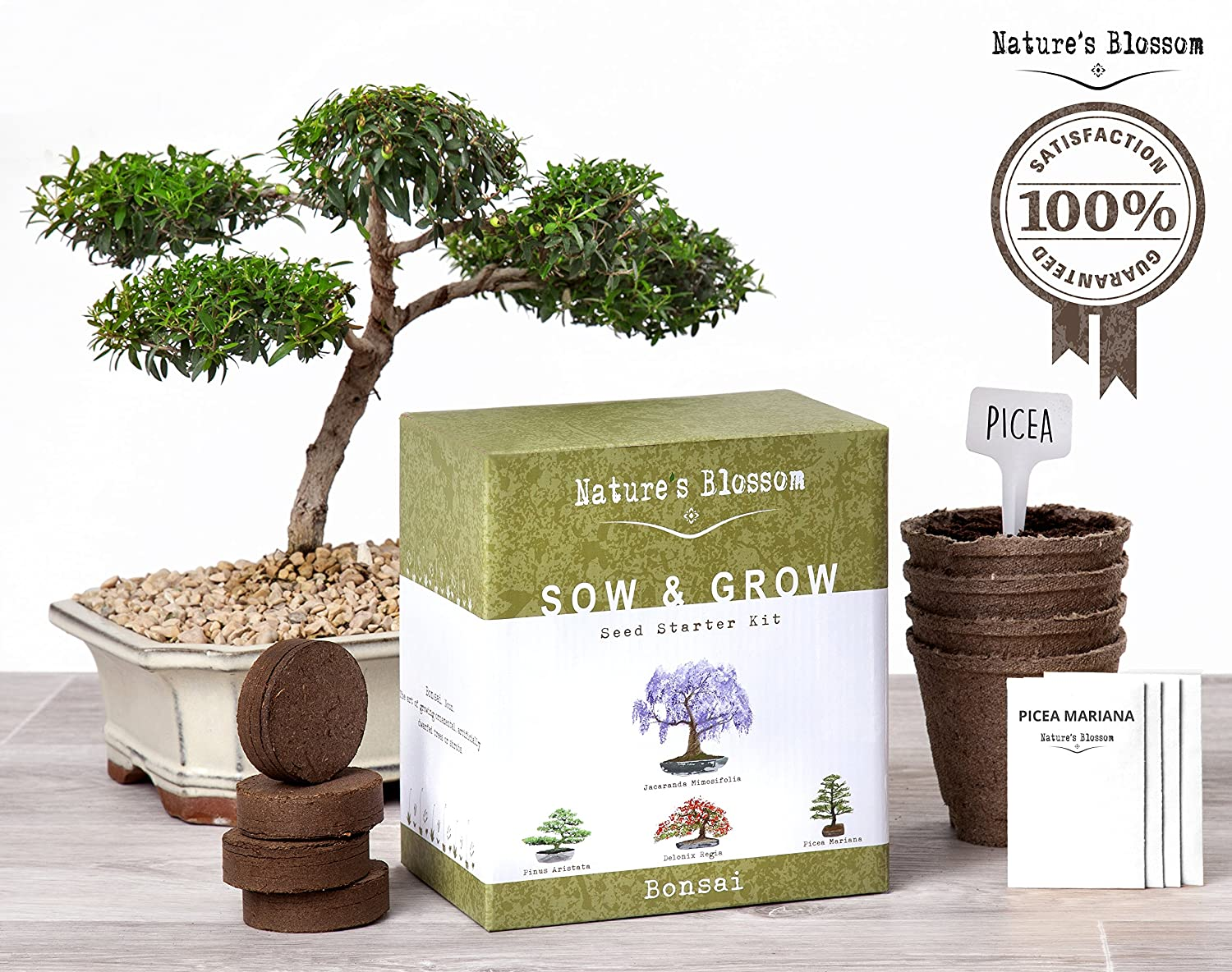 Best Selling, Grow 4 Bonsai Trees with Nature's Blossom Growing Kit – Soil, Pots & Tree Seeds Included.