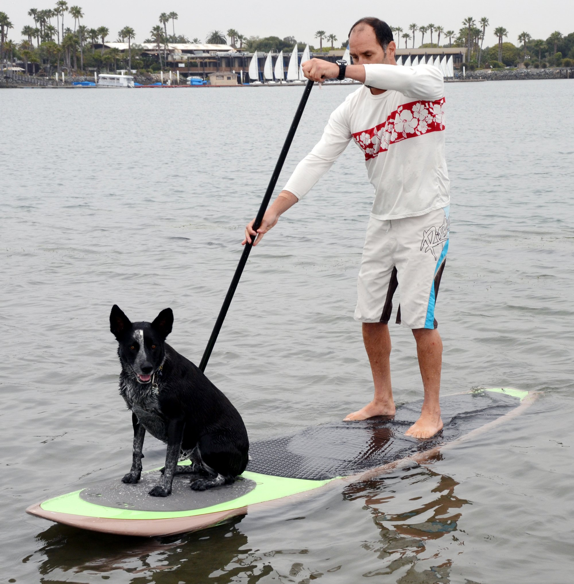 Pup Deck Stand Up Paddle Board Traction Pad For Dogs - Solid Pad
