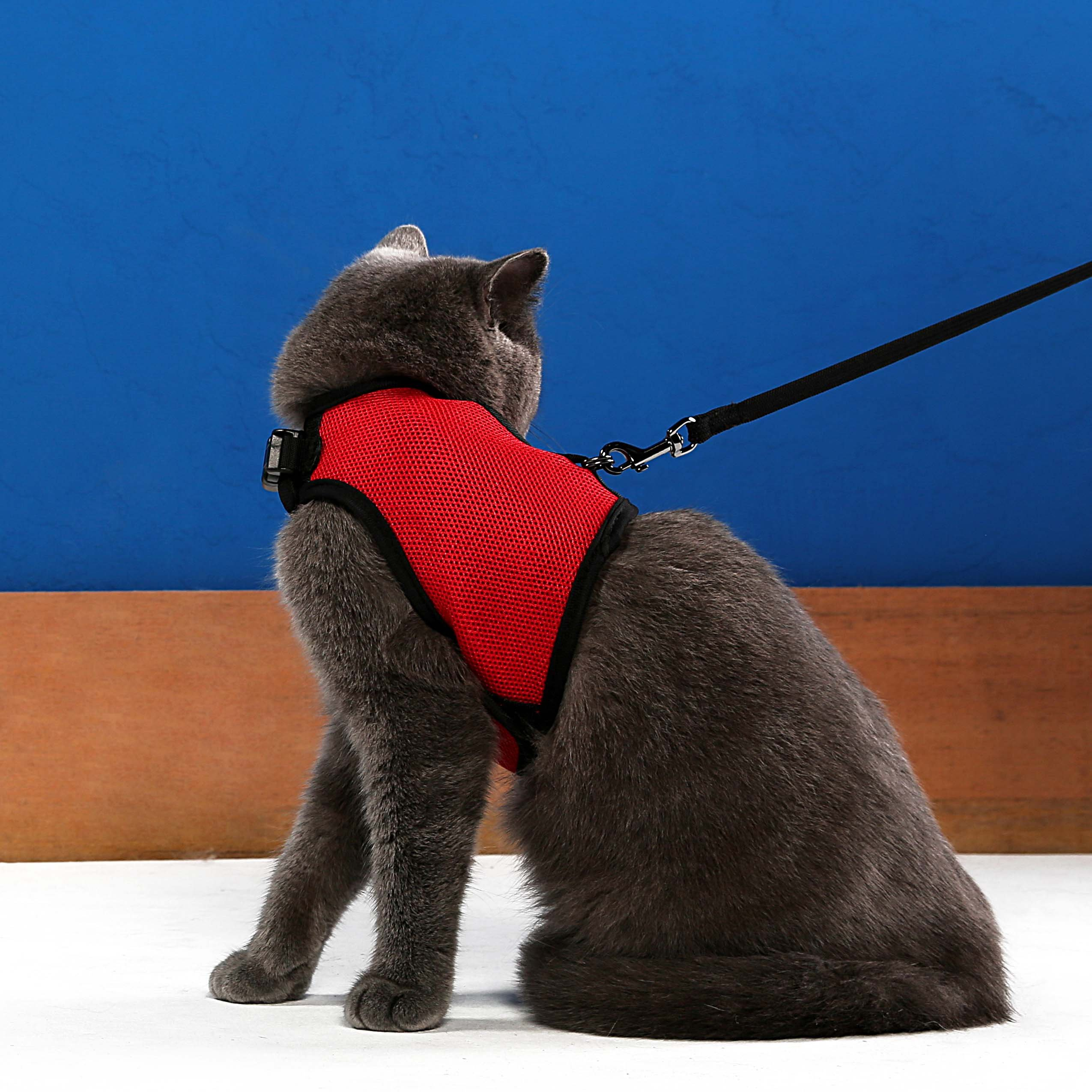 Niteangel 2-Pack of Adjustable Cat Harness with Elastic Leash (M & L, Red)