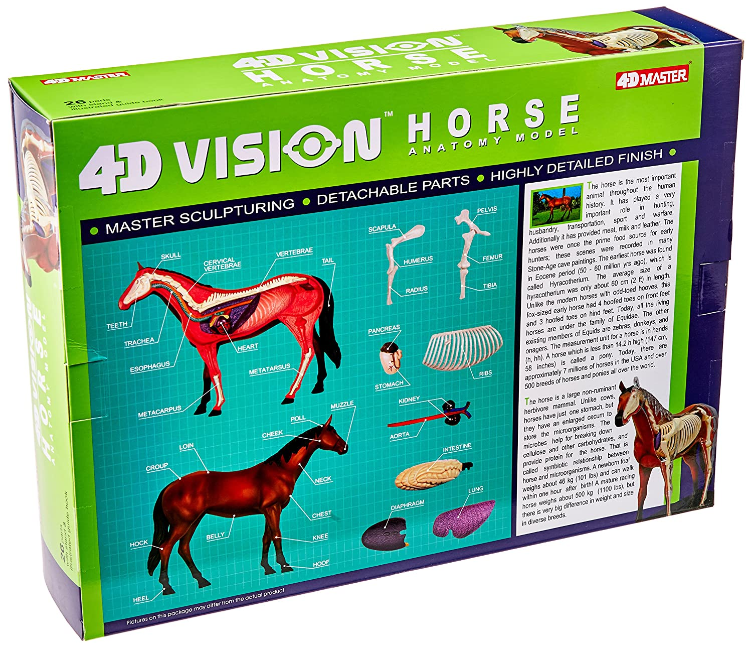 Tedco 4D Vision Horse Model 26101