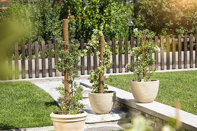 Windhager 05660 - Guía para Plantas (Extensible, Fibra de Coco, 60 ...