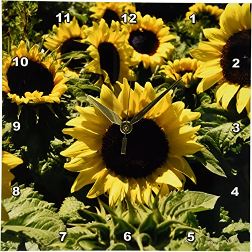3dRose Patricia Sanders Sunflowers Wall Clock, 10 by 10-Inch