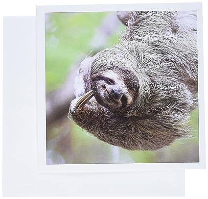 Amazon 3drose brown throated sloth wildlife corcovado costa 3drose brown throated sloth wildlife corcovado costa rica sa22 jgs0017 jim goldstein m4hsunfo