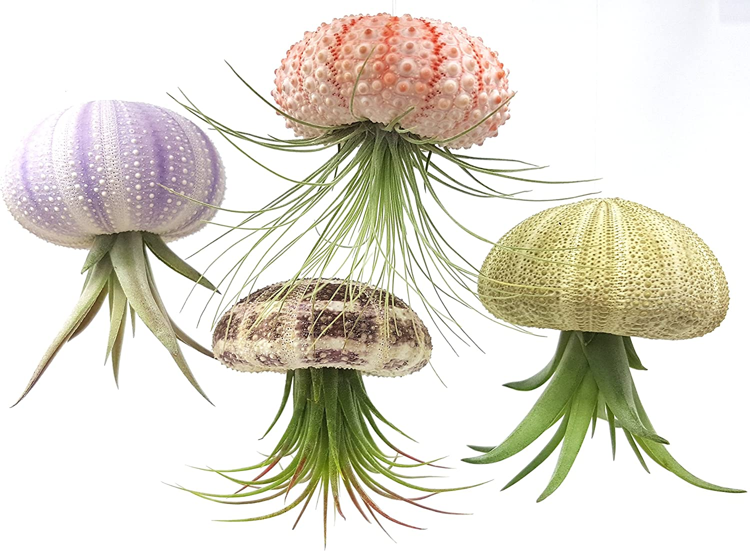 Air Plant hanging Jelly Fish 3