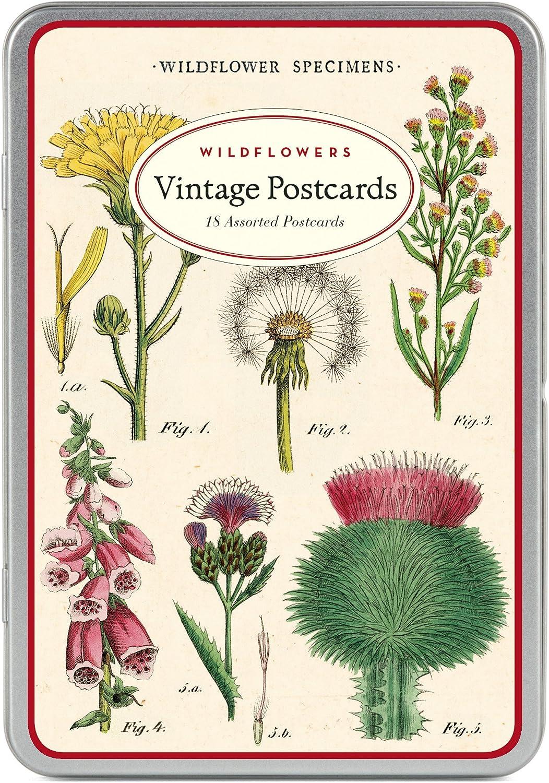 Cavallini /& Co Wildflowers Vintage Postcard Set