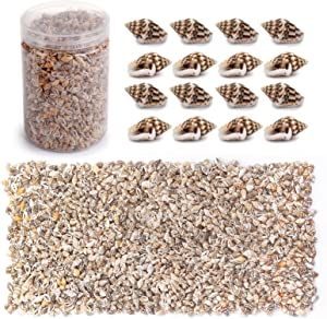 yarlung 3000 Pieces Tiny Sea Shell Conch, Mixed Beach Spiral Seashells Natural Shells for Fish Tank, Vase Filler, Home Decorations, Beach Theme Party, Candle Making, Wedding Decor, DIY Crafts