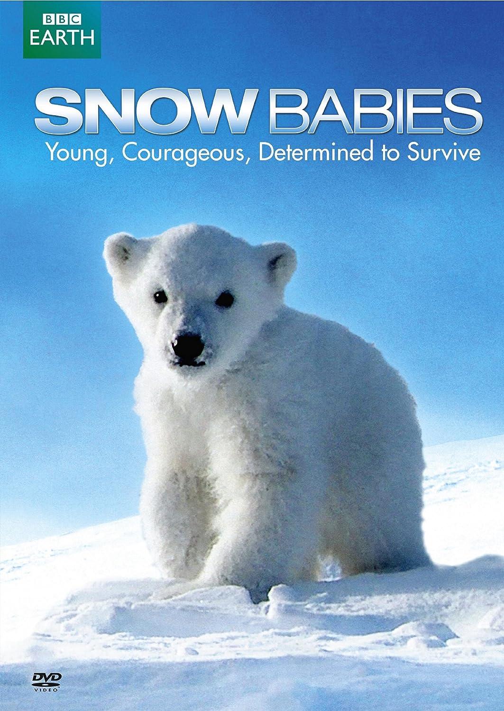 amazon com snow babies polar bear spy on the ice various