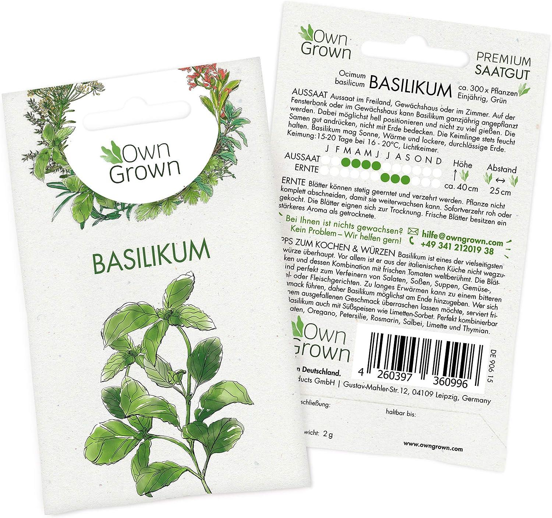Basilikum im Set 3 Pflanzen frische Pflanzen in bester Qualität
