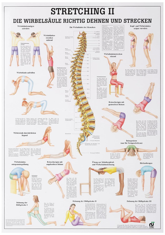 Stretching II Mini-Poster Anatomie 34x24 cm medizinische Lehrmittel 24 cm x 34 cm laminiert Ruediger Anatomie MIPO69LAM