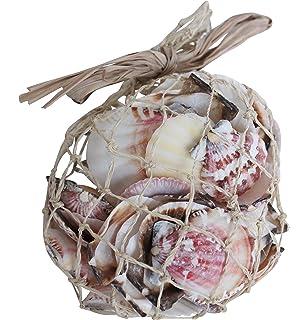 assorted seashells 300g bag nautical sea shell seaside decor