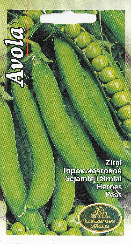 Graines de pois Avola 60 graines