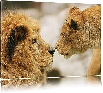 Verliebtes Löwenpaar Format 100x70 Auf Leinwand Xxl