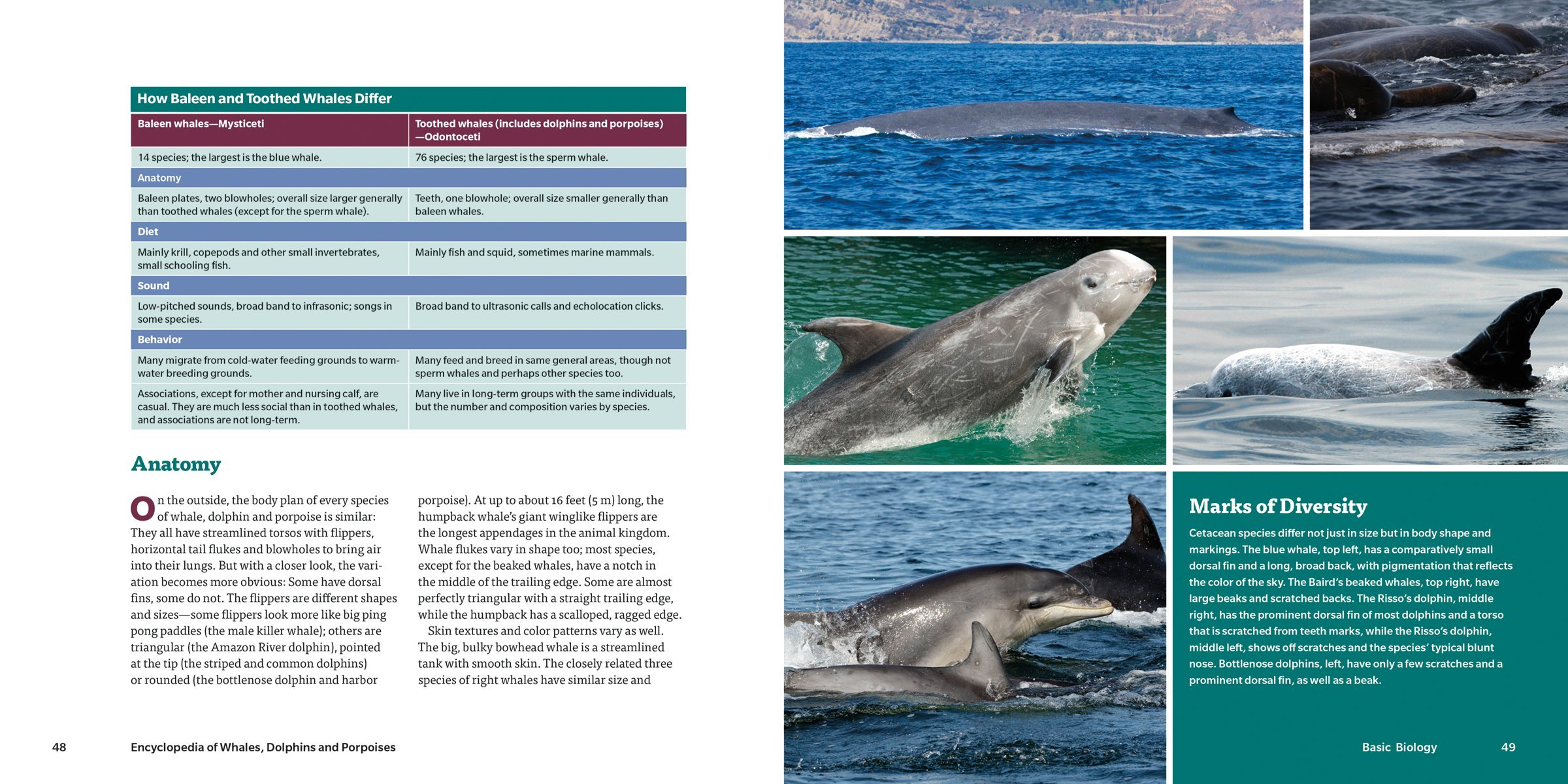 Encyclopedia of Whales, Dolphins and Porpoises: Erich Hoyt ...