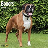Boxers 2018 16 Month Wall Calendar 12 x 12 inches Bright Day Calendars Publishing
