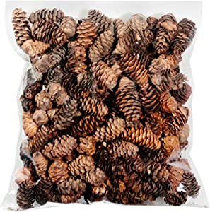 Super Moss 24511 Black Spruce Pine Cones, 8-Ounce, Brown