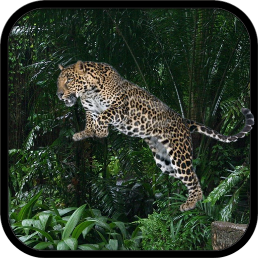 Wild Leopard Simulator
