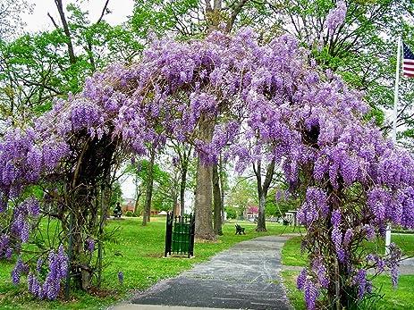 Spring Villa Lane