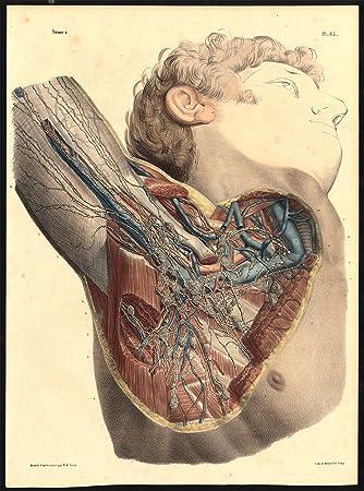 Amazon.com: Original Anatomy Print-LYMPHATIC VESSEL-GANGLION-ARMPIT ...