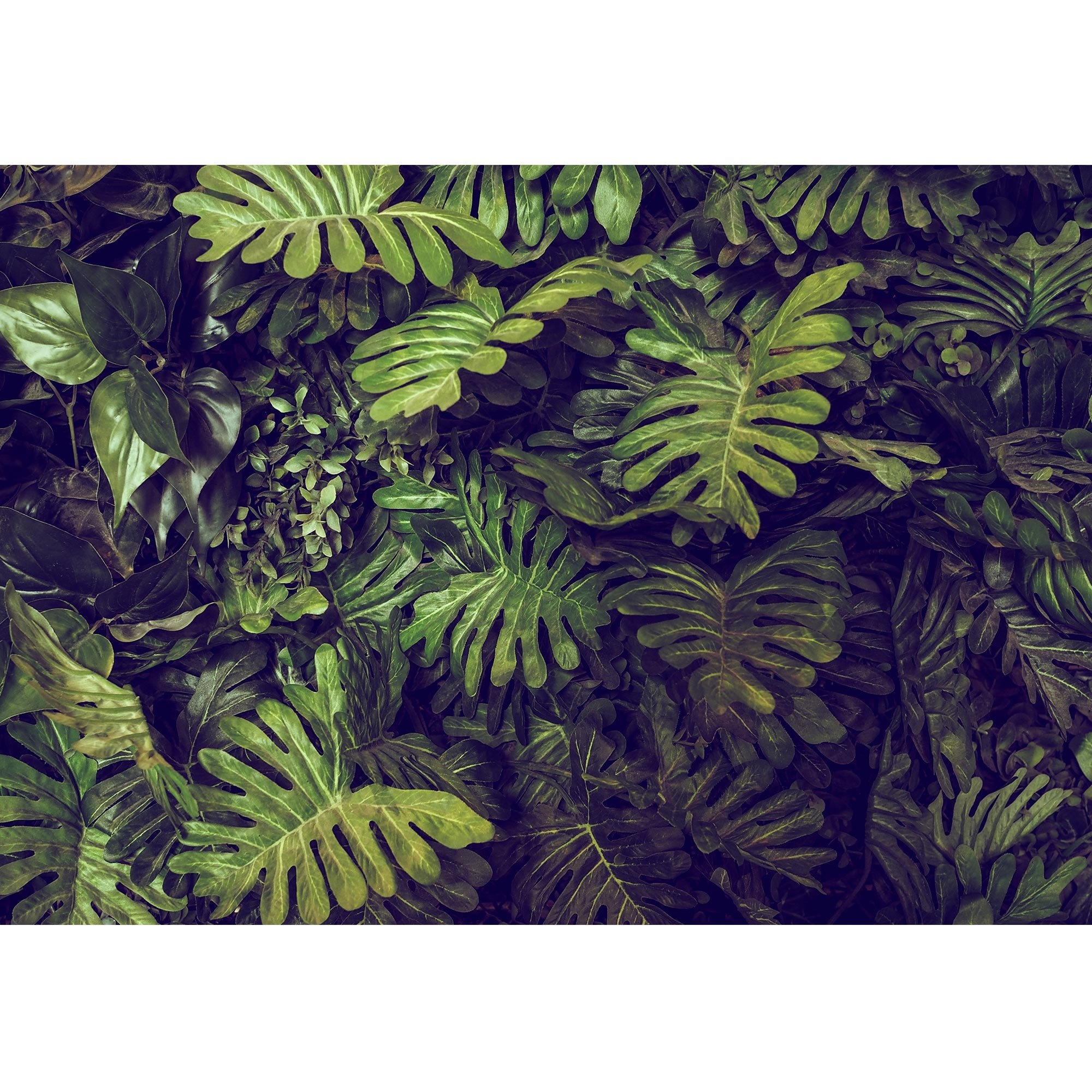 wall26 - Green Monstera Leaves Texture for Background - Top View - in Dark Tone. - Removable Wall Mural | Self-Adhesive Large Wallpaper - 100x144 inches by wall26 (Image #2)