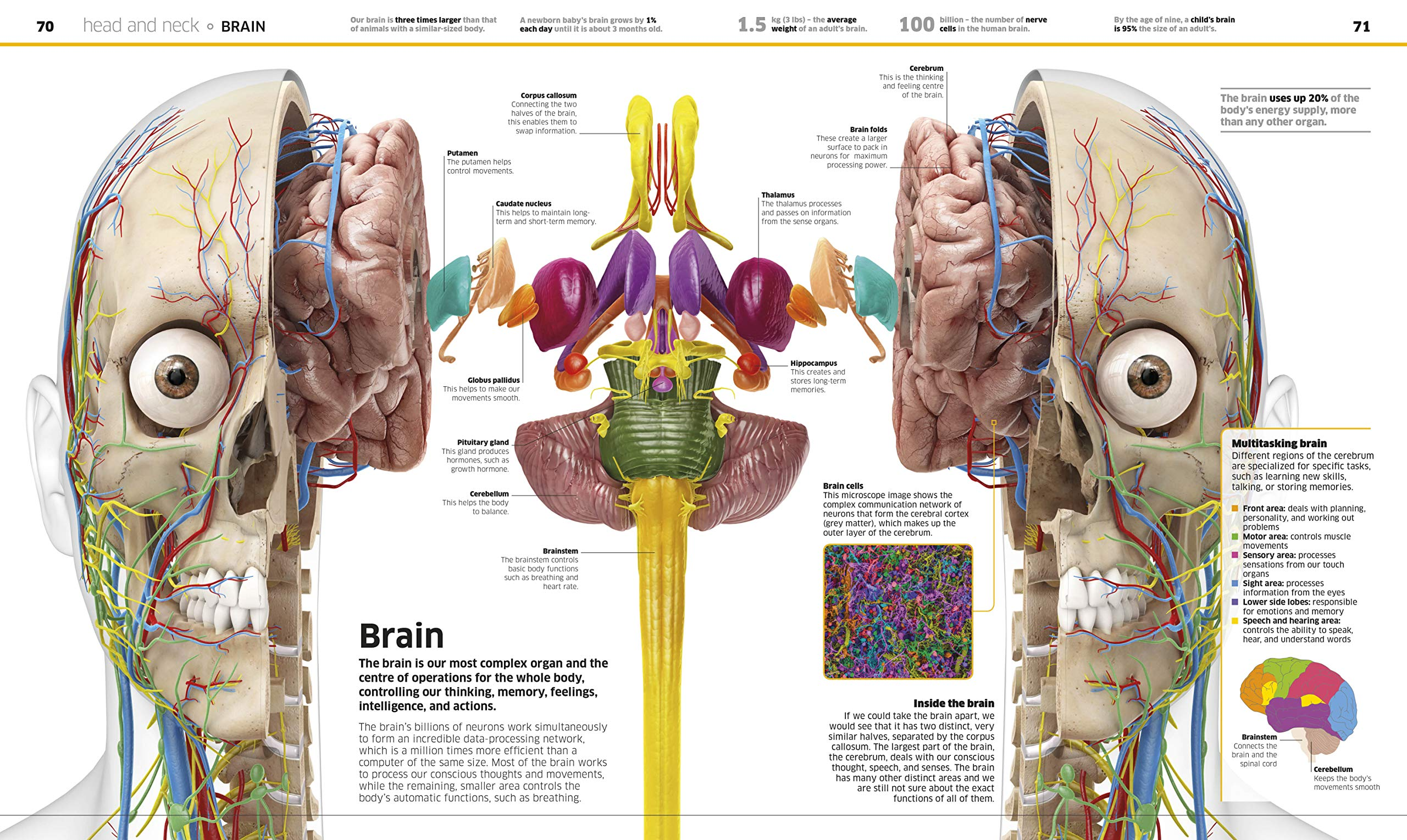 Knowledge Encyclopedia Human Body!: Amazon.es: Vv.Aa., Vv.Aa.: Libros en idiomas extranjeros