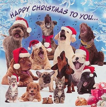 Weihnachtskarten Tiere.Tier Tiere Charity Weihnachtskarten 10 Stück Amazon De Küche