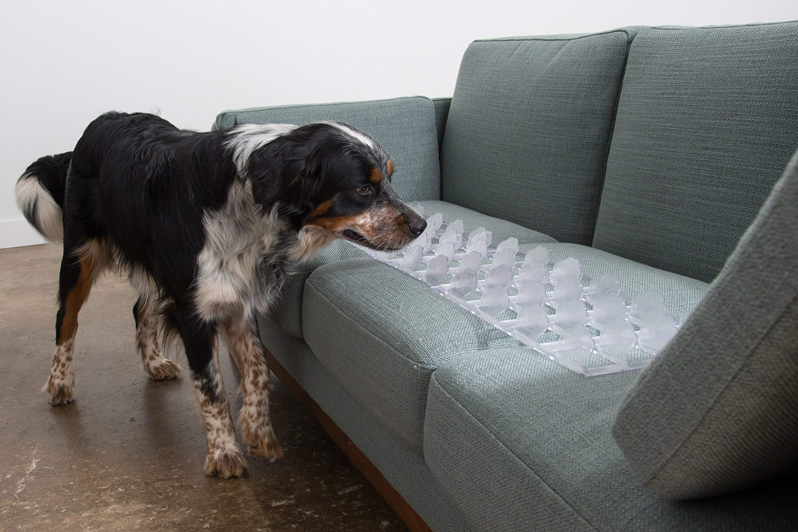 Couch Guard & Furniture Protector - Keep Dogs & Pets Safely off Furniture (Quantity 4 /CLEAR) Made in USA! by PeachtreePet.com Made in USA