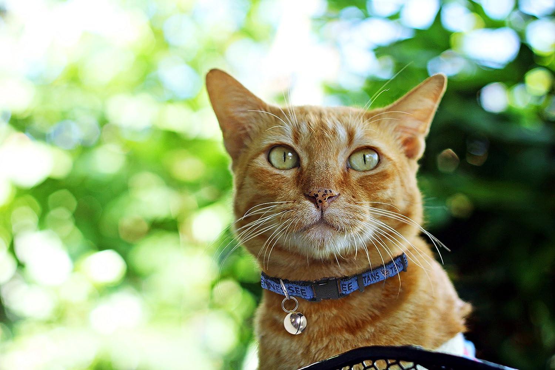 4e20f8284 BUFFALO BILLS CAT COLLAR. - Strong    Adjustable FOOTBALL Cat Collars with  Metal Jingle Bell Pets First ...
