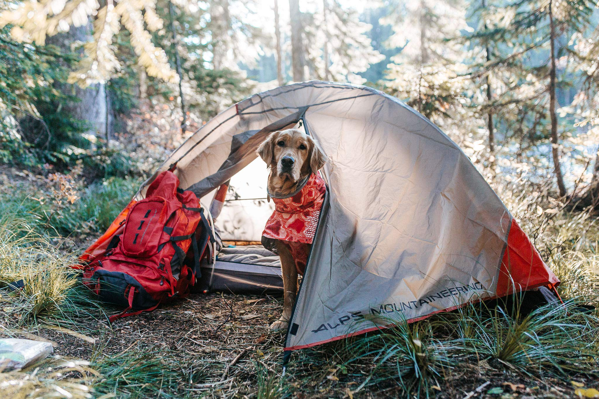 ALPS Mountaineering Lynx 4-Person Tent, Clay/Rust by ALPS Mountaineering (Image #11)