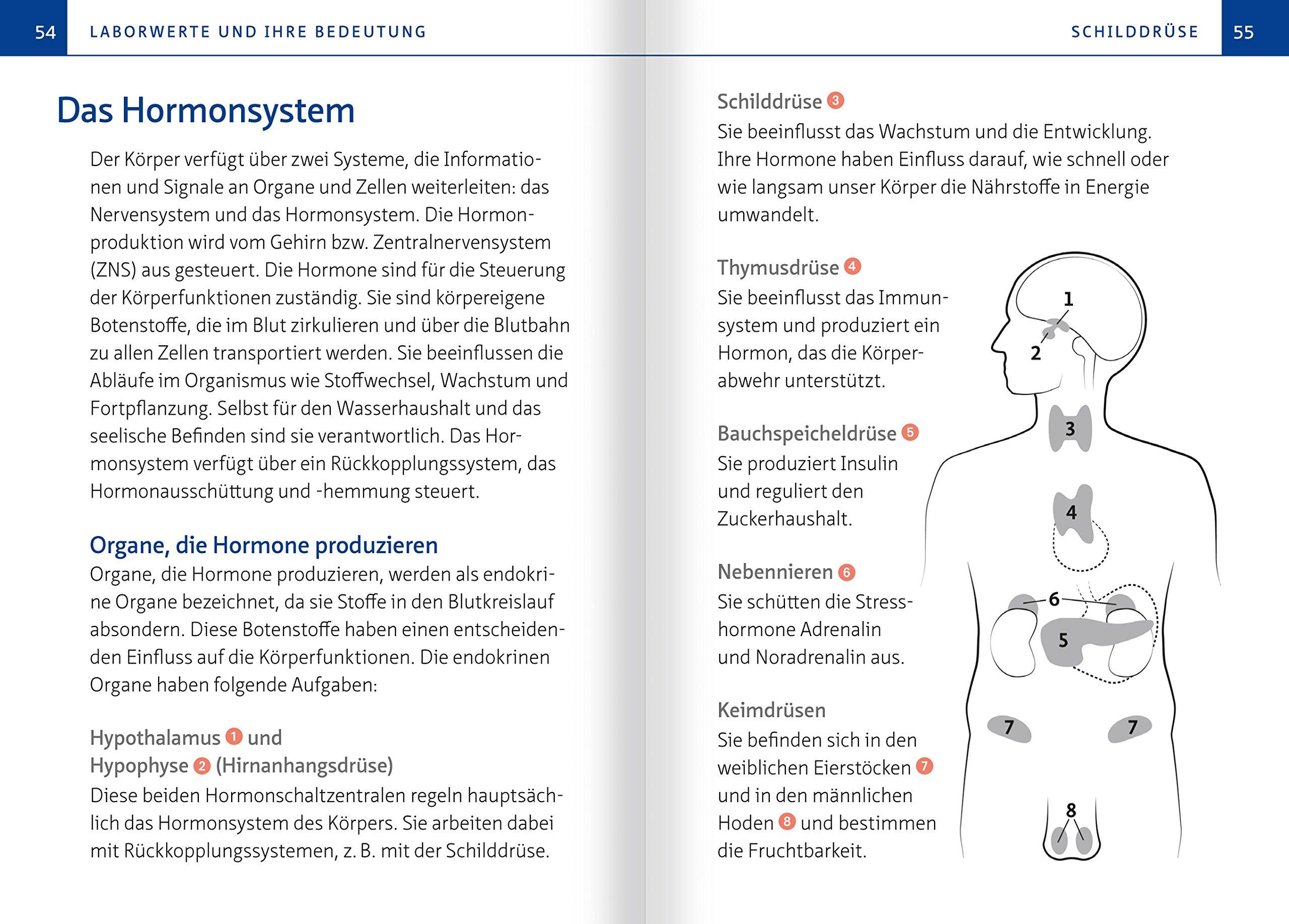 Niedlich Hormone Die Von Den Nebennieren Produziert Bilder ...