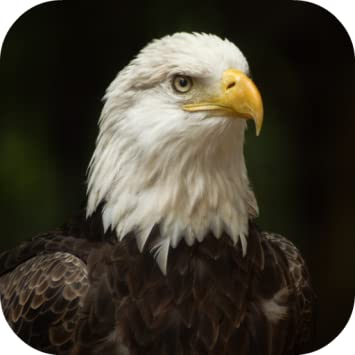 Amazon Com Bald Eagle Wallpapers Appstore For Android