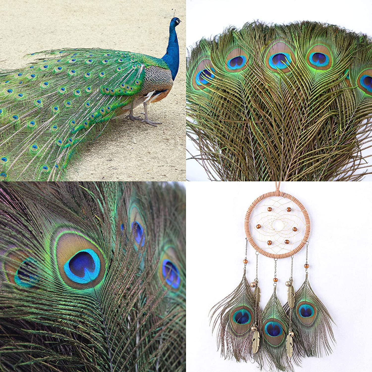 Turquoise, 15pcs Dreamcatcher Making Acerich Peacock Feathers Wedding Holiday Decoration Home 10-12 Inches Animal Birds Craft Feathers with Big Peacock Eye for Crafts