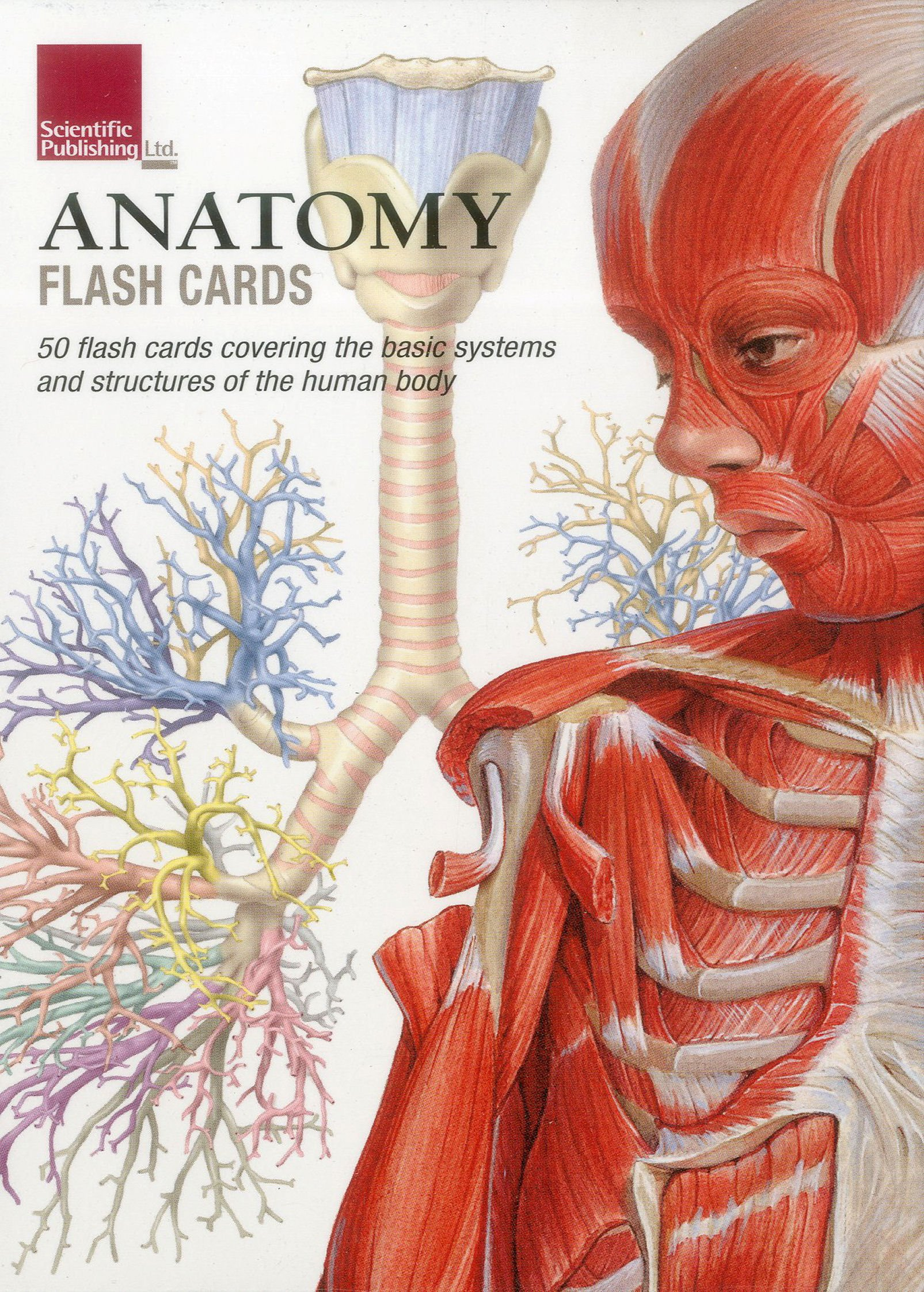 Anatomy Flash Cards Amazon Katharine Branning 9781935612278