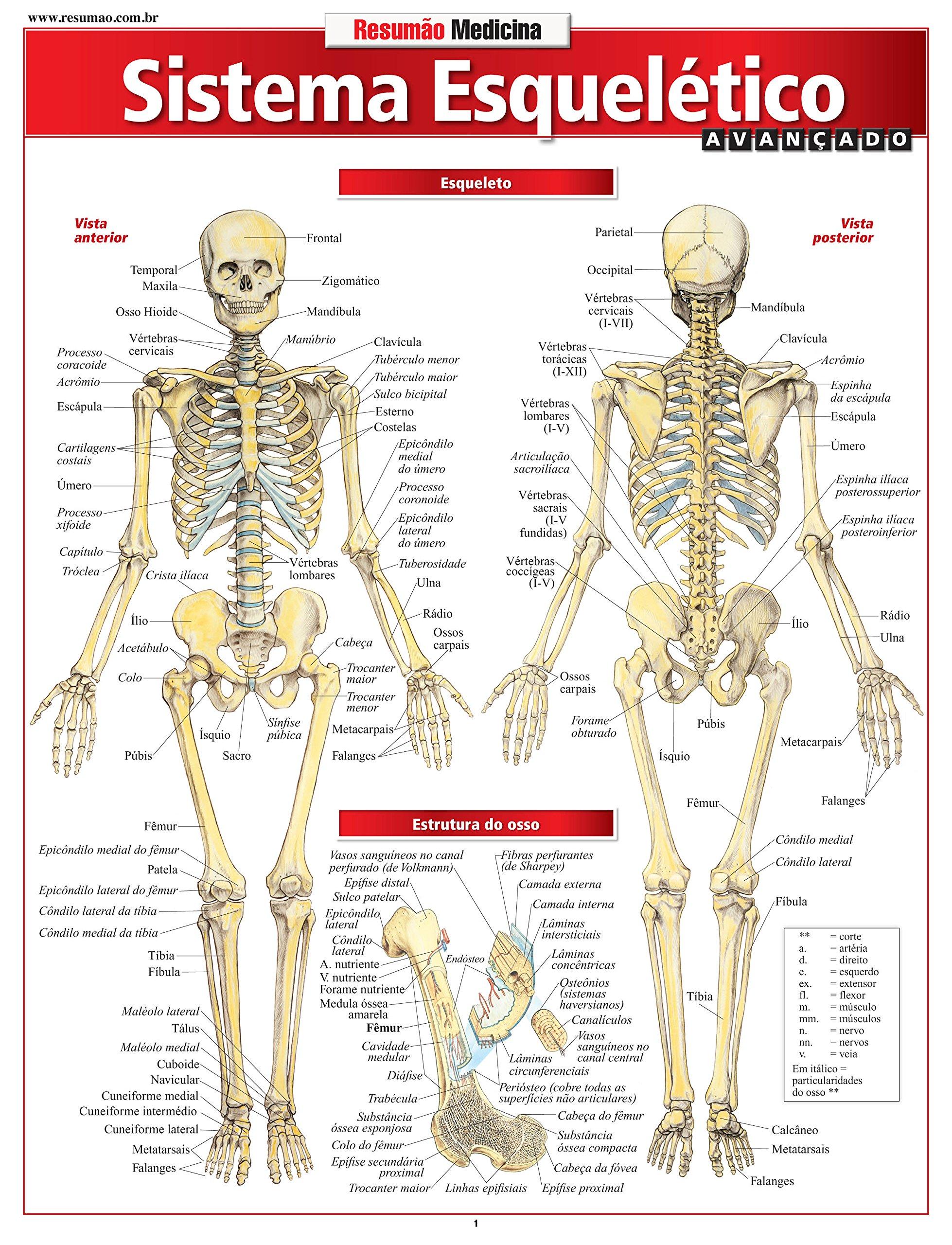 Sistema articular do corpo humano pdf