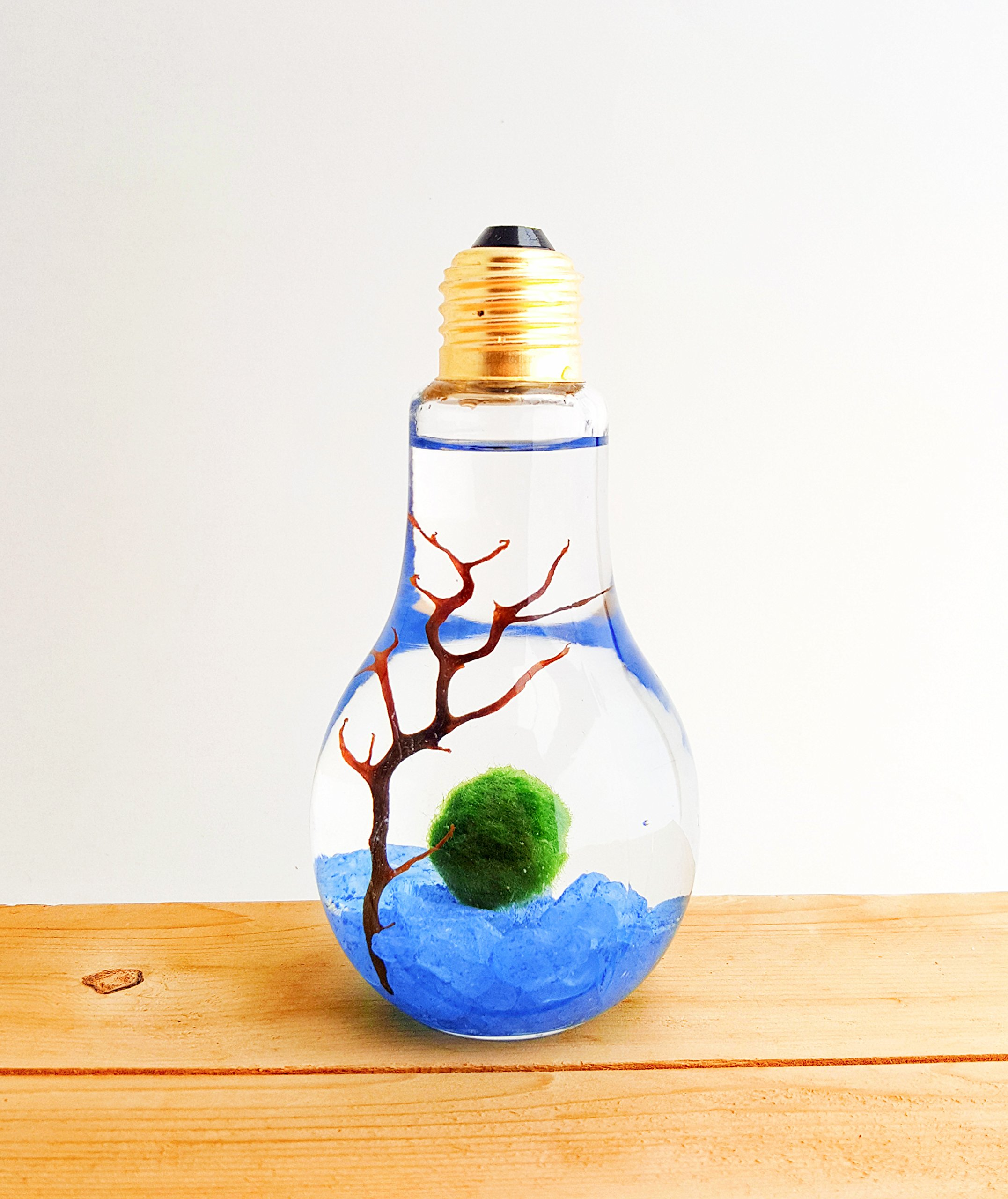 Bliss Gardens Marimo Moss Ball Light Bulb Water Terrarium/Blue Rocks/Great Gift/New Pet/Aquatic Plant