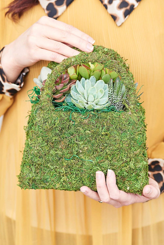 Hallmark Flowers Live Succulent Garden In 8 Inch Concrete Log Container