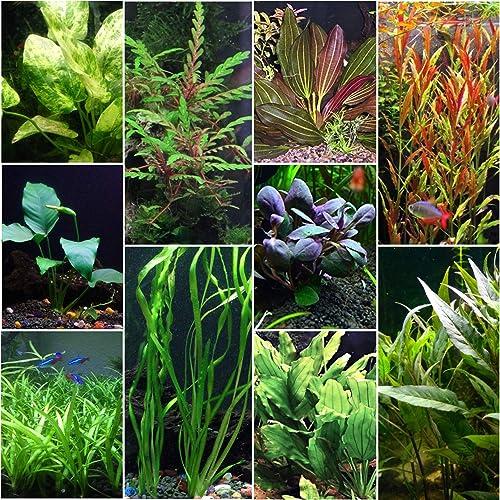Florida-10-Species-Live-Aquarium-Plants-Bundle-to-Reduce-Nitrates