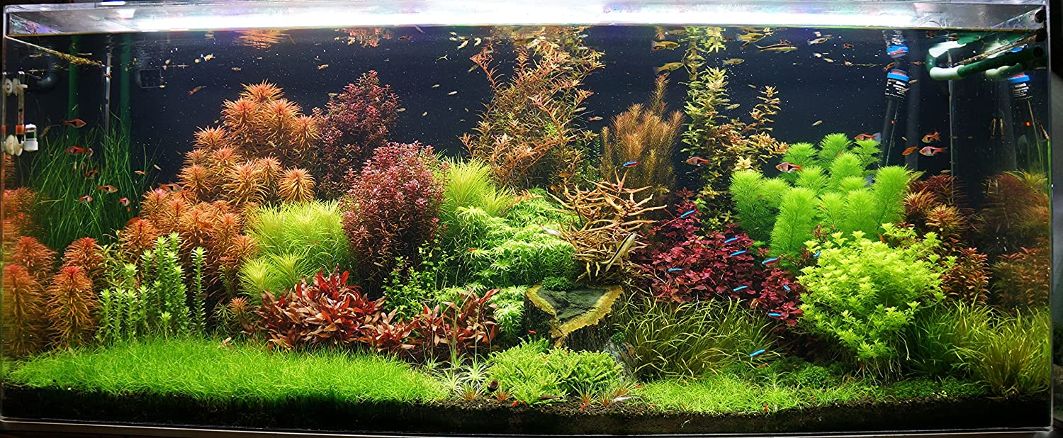 10 Live Aquarium Plants Tropical Aquatic Plants for your fish tank Biotope Aquatics Ltd