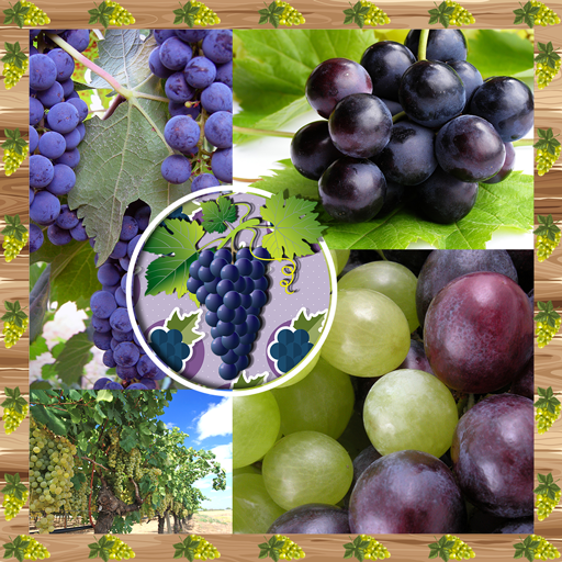 Grapes Photo Collage (Best App For Editing Vines)