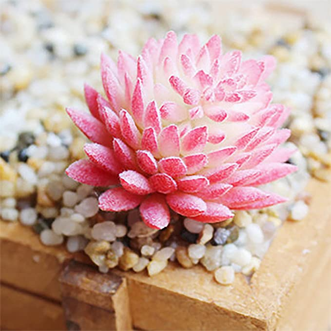 BCP 4 Pcs Artificial Mini Succulents Cactus Plant Flower DIY Materials Plants Wall 4 Color