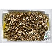 Conservas de caracoles