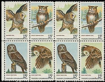 amazon com american owls birds of prey great grey owl saw whet
