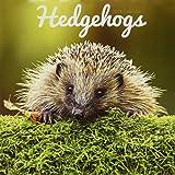 Hedgehogs - Igel 2018: Original Carousel-Kalender [Mehrsprachig] [Kalender] (Wall-Kalender)