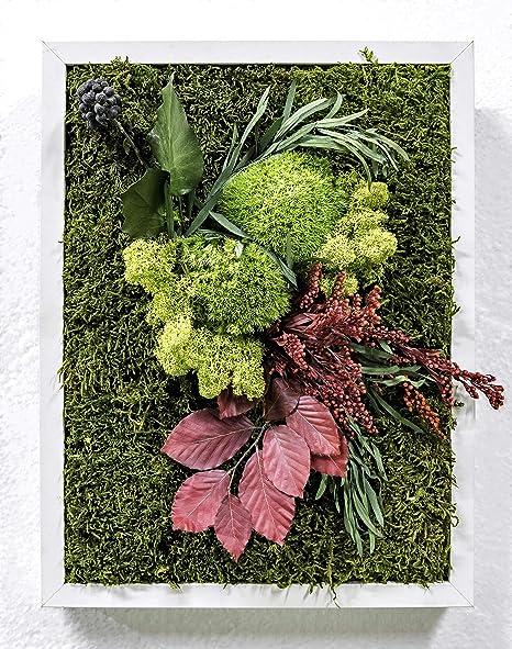Mi Jardín Vertical Musgo Preservado Cuadro Vegetal 30 x 40 cm (Trastevere): Amazon.es: Hogar