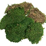 BirchForest Green Sheet Moss Dried, Preserved Sheet Moss, Fresh Green (Pack of 6oz)