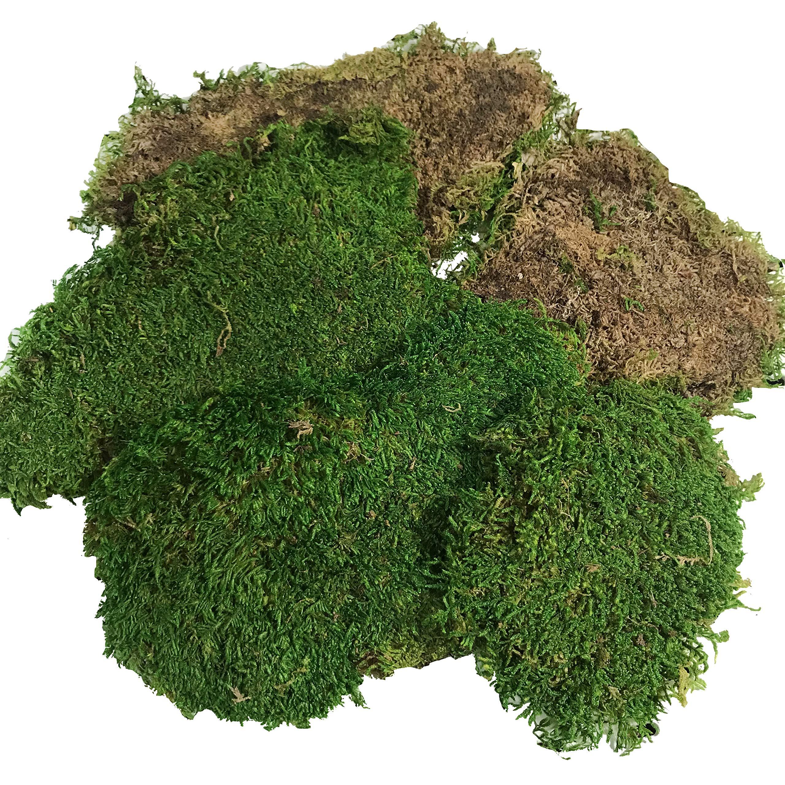 Pack of 2.5oz Preserved Moss Reindeer Moss Floral Moss