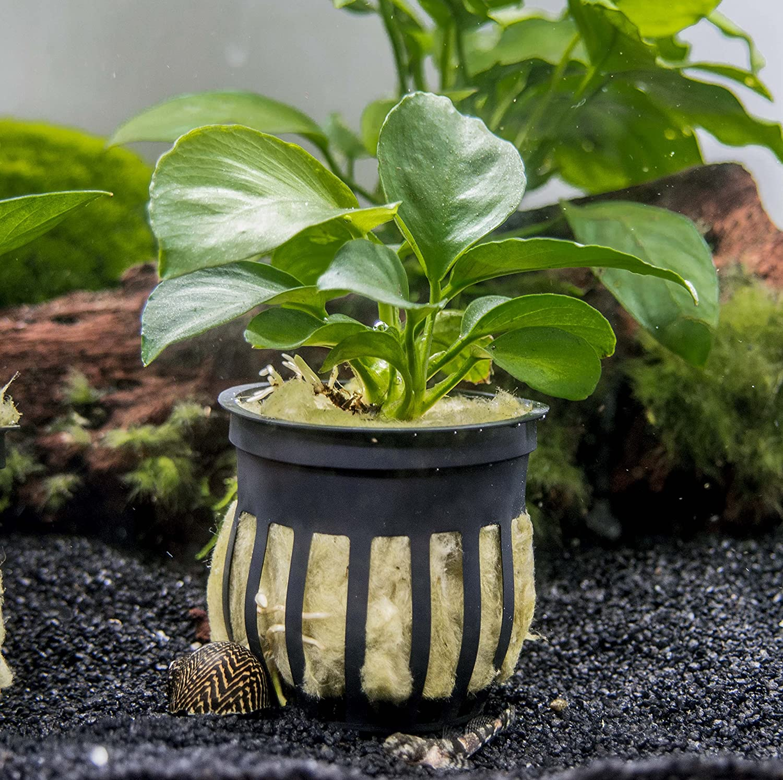 Amazon EASY Aquarium Plant Package 5 10 Gallon HEAVILY
