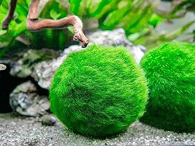 Aquatic Arts 3 Betta Fish Balls