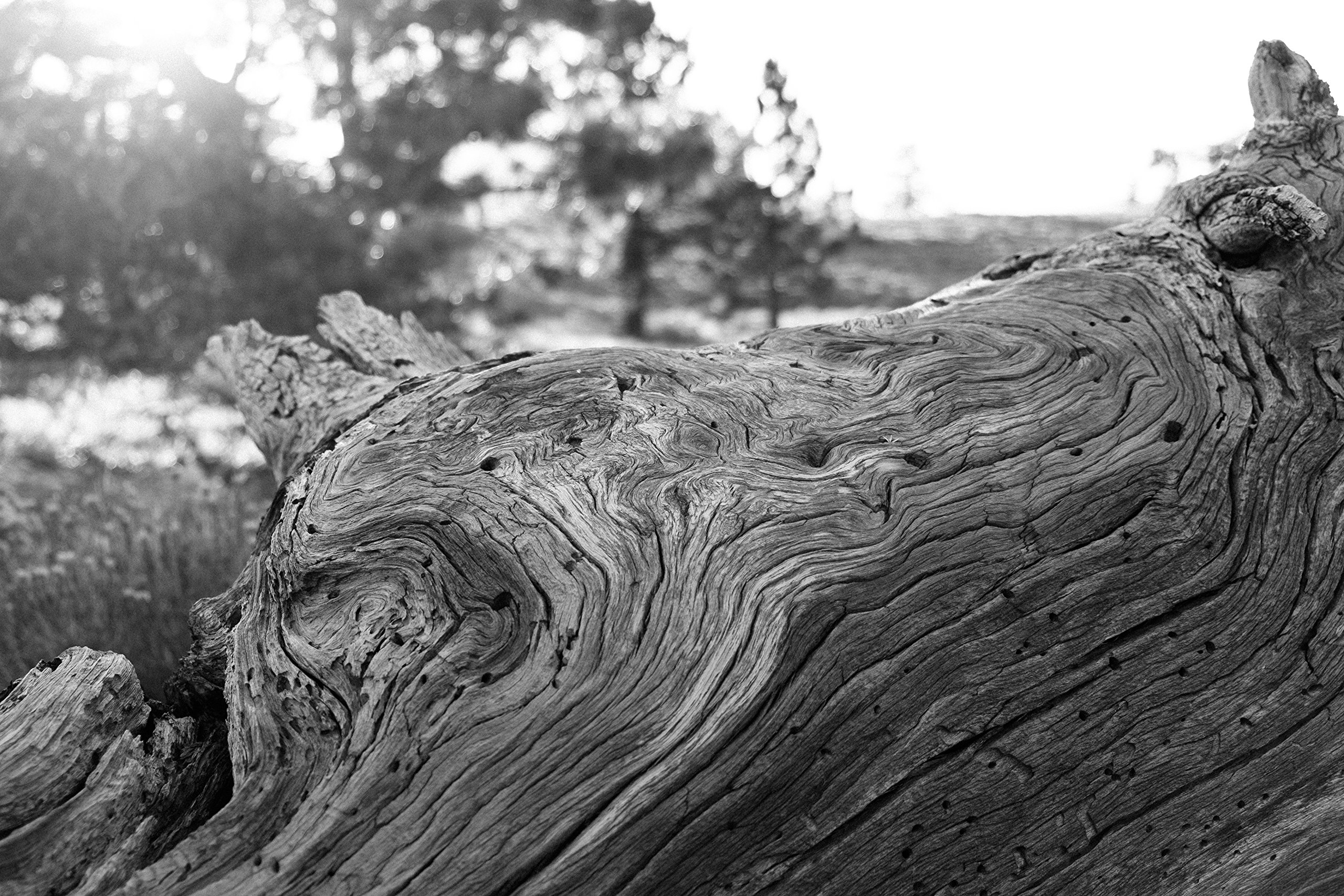 Black And White Wood