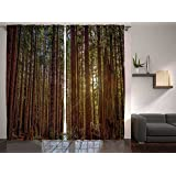Nature Decor Curtains By Ambesonne, Redwood Forest in California, Window Drapes 2 Panel Set For Living Room Bedroom, 108 W X 84 L Inches